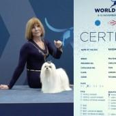 L1040098-kassandra-certifikat