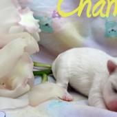 DSC01502-chanel